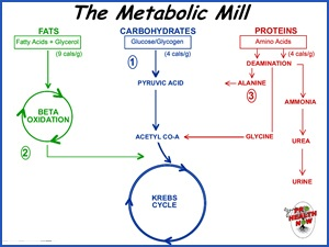 Metabolic-Mill