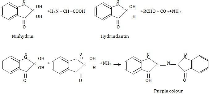 amino acid research paper