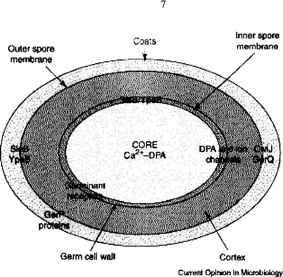 layers of cell wall