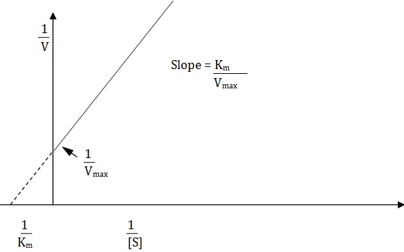 linear burk plot of the reciprocals of velocity and substrate cncentration for determining km and vmax